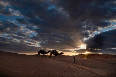 Camels at Sunrise Amid Sahara Dunes, Morocco