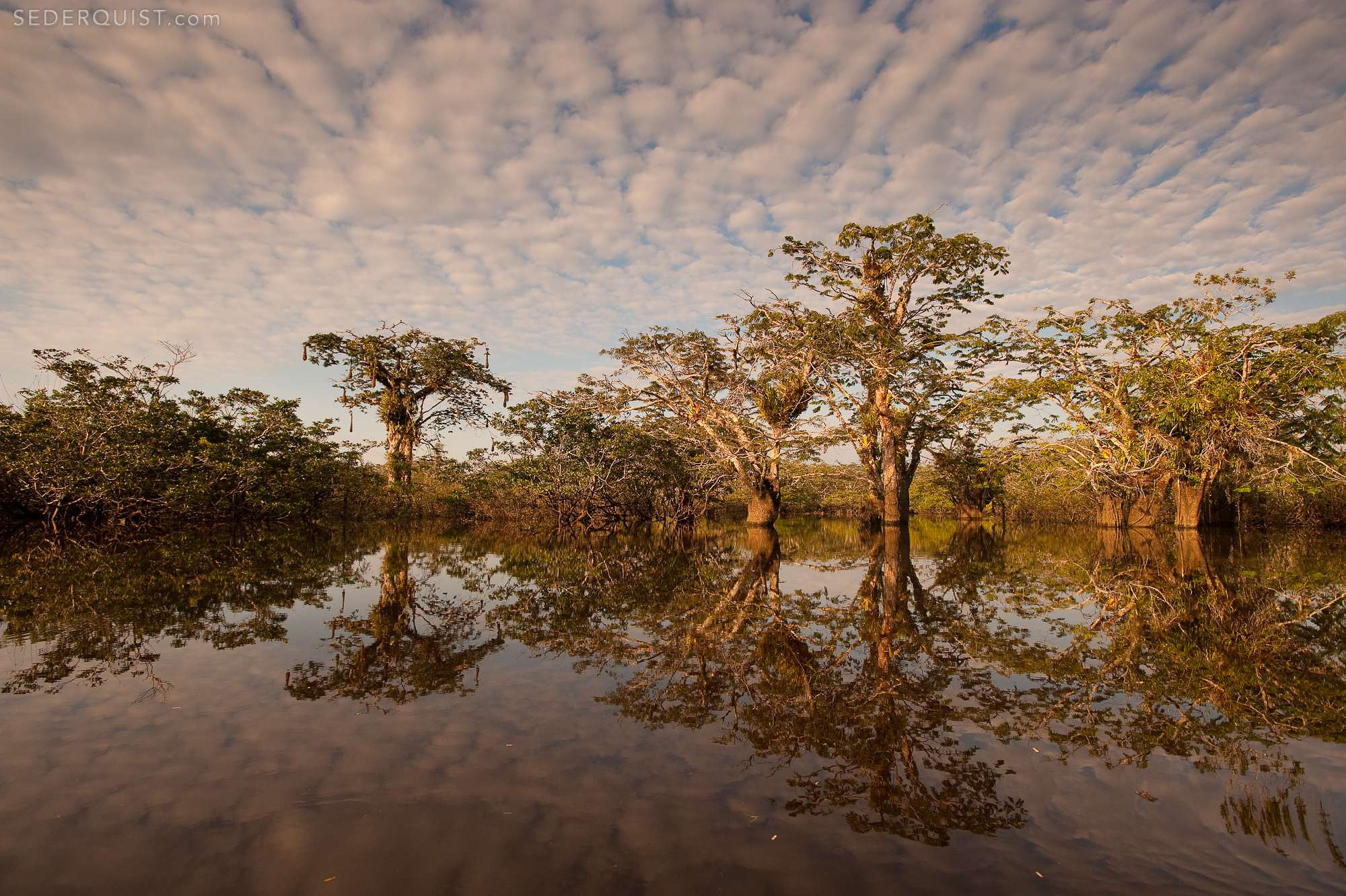 The Amazon and Cloud Forest - Betty Sederquist Photography