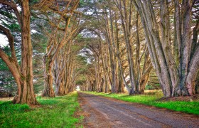 Point Reyes Trees