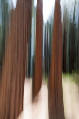 Tree Blur Yosemite